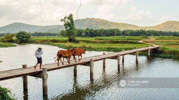 Hãy đến những nơi này để thấy Phú Yên còn đẹp hơn những gì bạn thấy trong hoa vàng cỏ xanh - Ảnh 29.