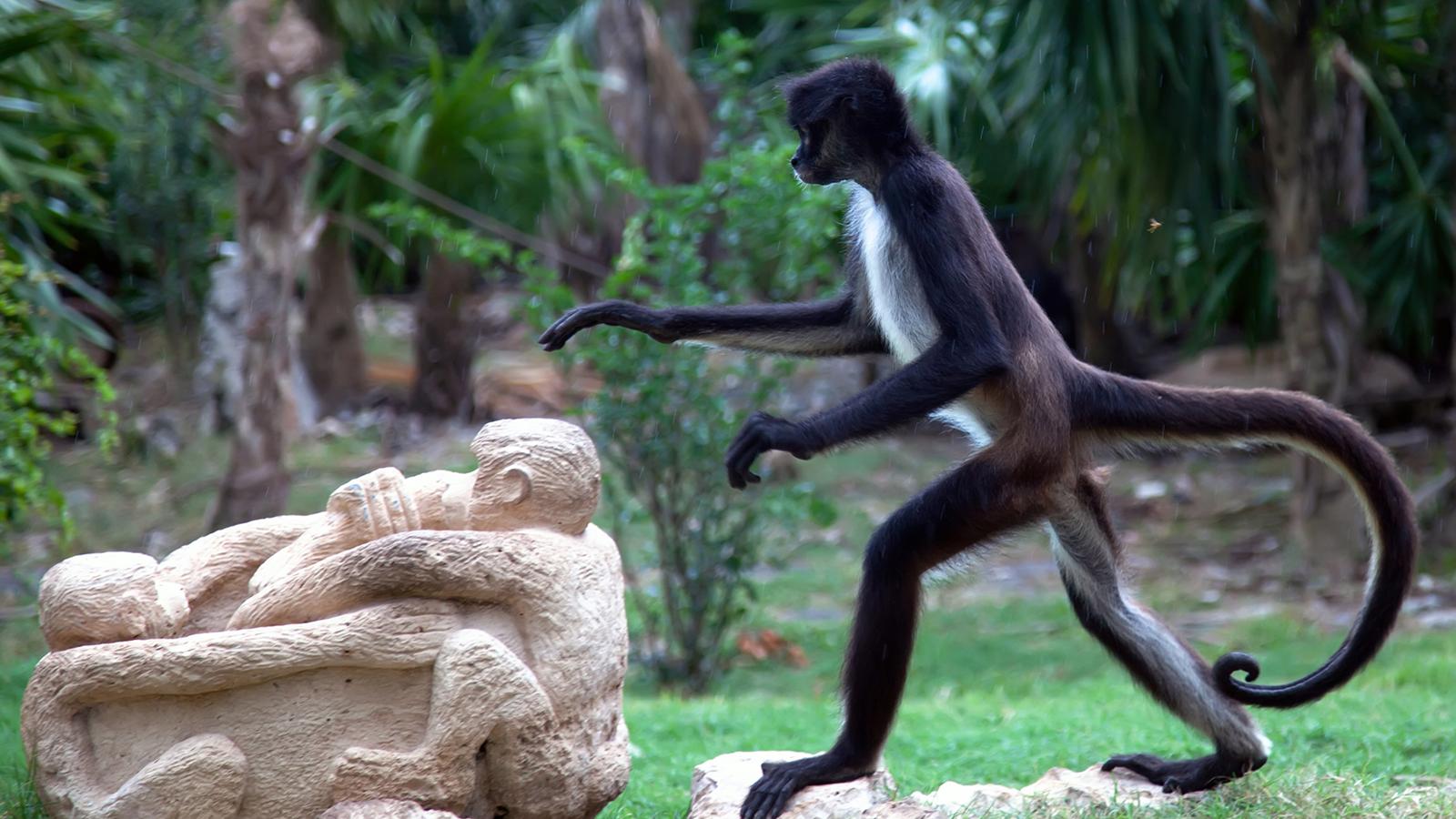 8 sự thiệt ít ai biết về loài khỉ - sinh vật nhí nhố nhất hành tinh - Ảnh 6.