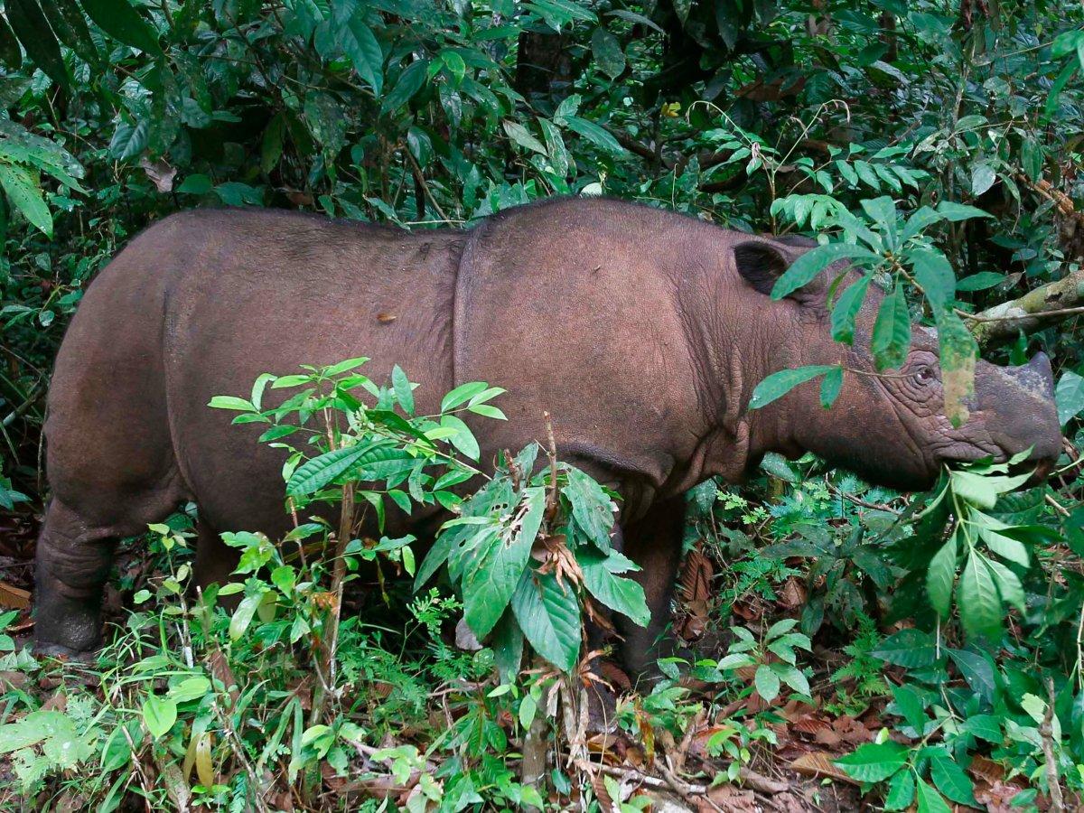 7 loài vật quý hiếm sắp vĩnh viễn biến mất khỏi hành tinh này - Ảnh 2.