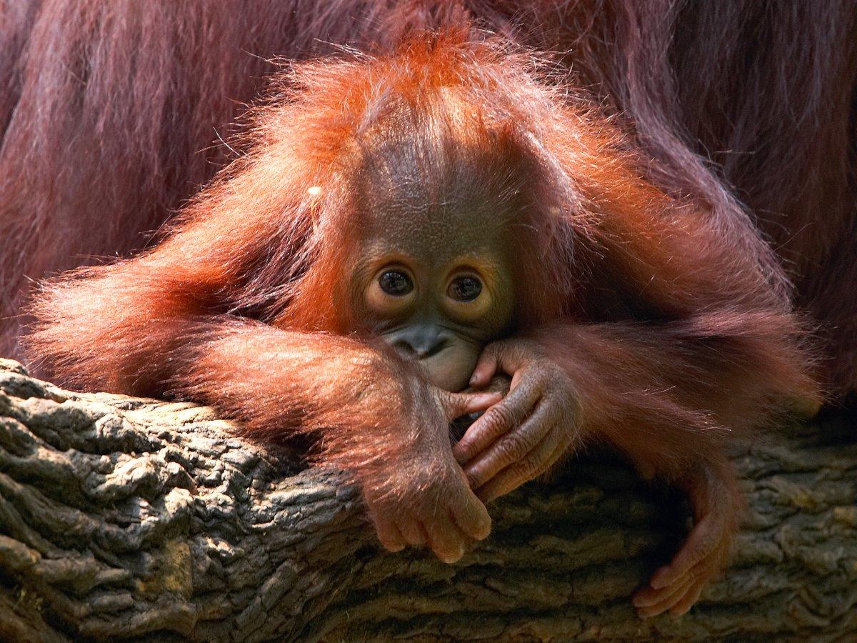 7 loài vật quý hiếm sắp vĩnh viễn biến mất khỏi hành tinh này - Ảnh 1.