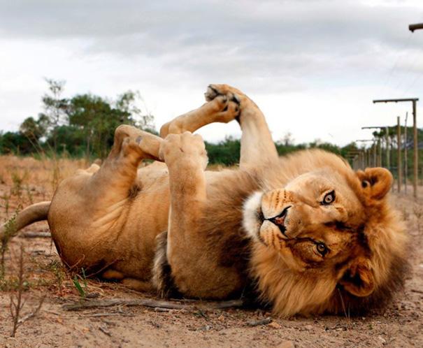 16 bé động vật biết tập yoga dẻo hơn cả bạn - Ảnh 7.