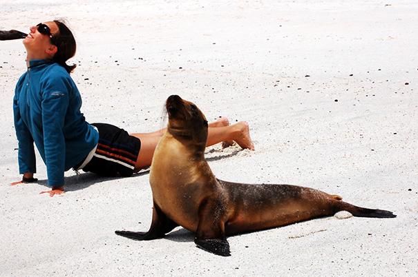 16 bé động vật biết tập yoga dẻo hơn cả bạn - Ảnh 12.
