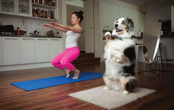 16 bé động vật biết tập yoga dẻo hơn cả bạn - Ảnh 13.