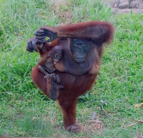 16 bé động vật biết tập yoga dẻo hơn cả bạn - Ảnh 14.