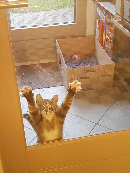 Phì cười với 10 pha chế ảnh mèo tinh nghịch của dân mạng - Ảnh 1.