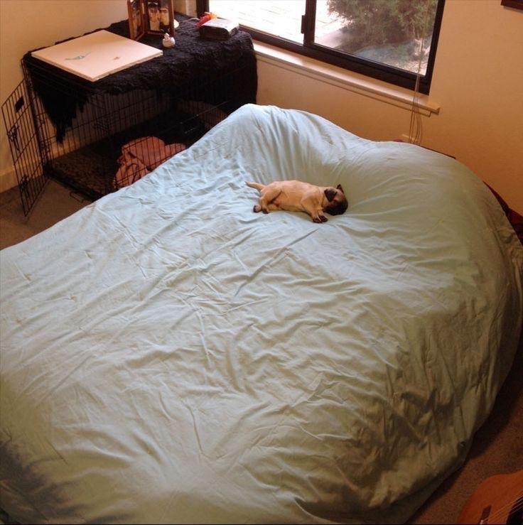 15 chú chó xấu tính chỉ thích độc chiếm một mình một giường mới chịu - Ảnh 1.