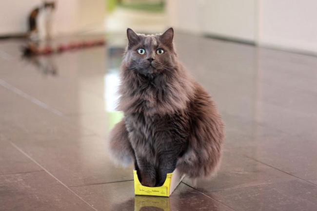 Muôn vàn kiểu chơi trốn tìm hài hước của các thánh mèo - Ảnh 1.