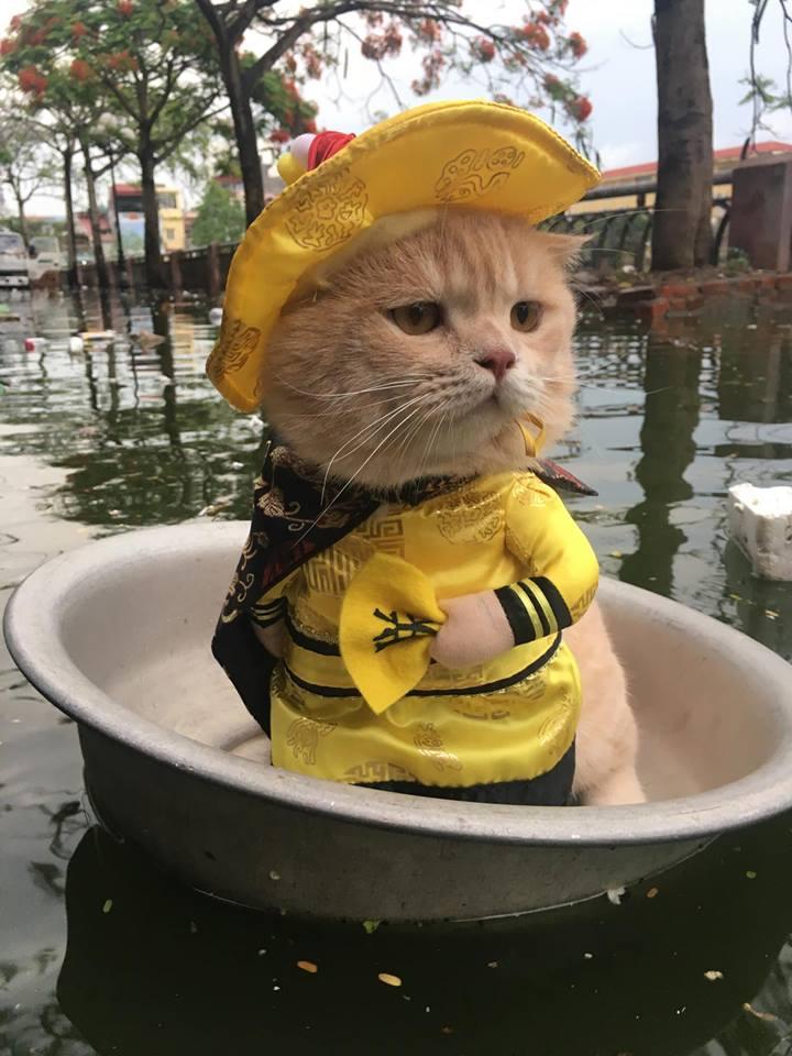 Gặp chú mèo Hoàng Thượng đi chợ vi hành, các con sen đều đứng ngồi không yên - Ảnh 3.