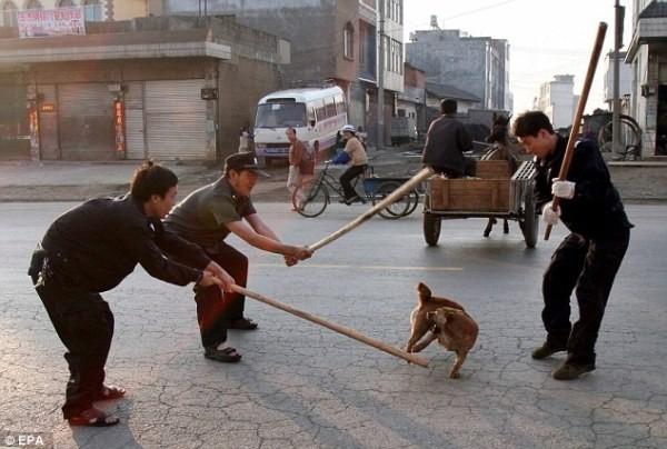 Xử lý chó hoang trên thế giới: Nơi đánh đập, đầu độc, chỗ đưa chó hoang về trung tâm bảo trợ để chờ nhận nuôi - Ảnh 7.