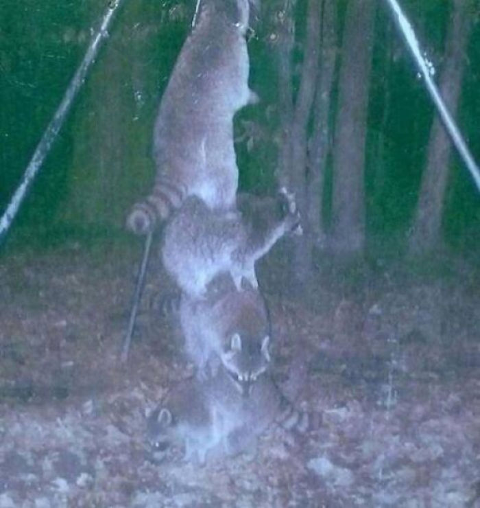 Đặt máy quay lén động vật, thợ săn bất ngờ khi thấy những hành vi kỳ lạ của chúng - Ảnh 1.