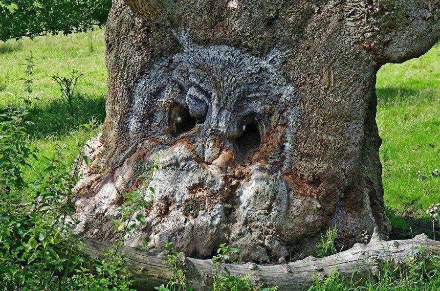 16 gương mặt ma quái tình cờ mọc trên những thân cây vô tri, vô giác - Ảnh 1.