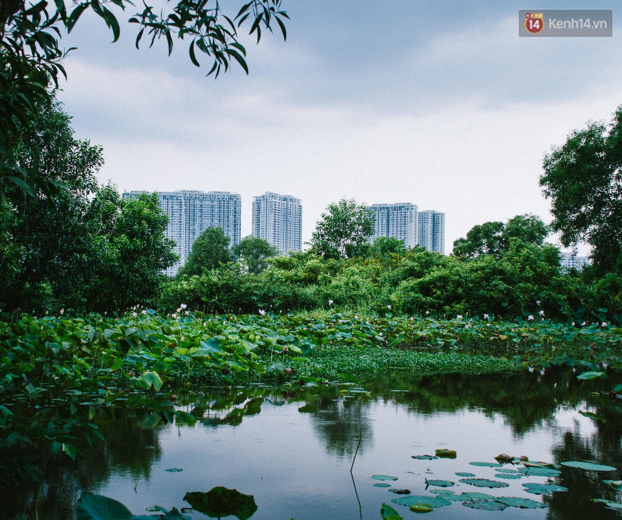 Chùm ảnh: Cuộc sống ở bán đảo Thanh Đa - Một miền nông thôn tách biệt dù chỉ cách trung tâm Sài Gòn vài km - Ảnh 6.