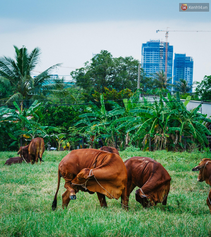 Chùm ảnh: Cuộc sống ở bán đảo Thanh Đa - Một miền nông thôn tách biệt dù chỉ cách trung tâm Sài Gòn vài km - Ảnh 13.