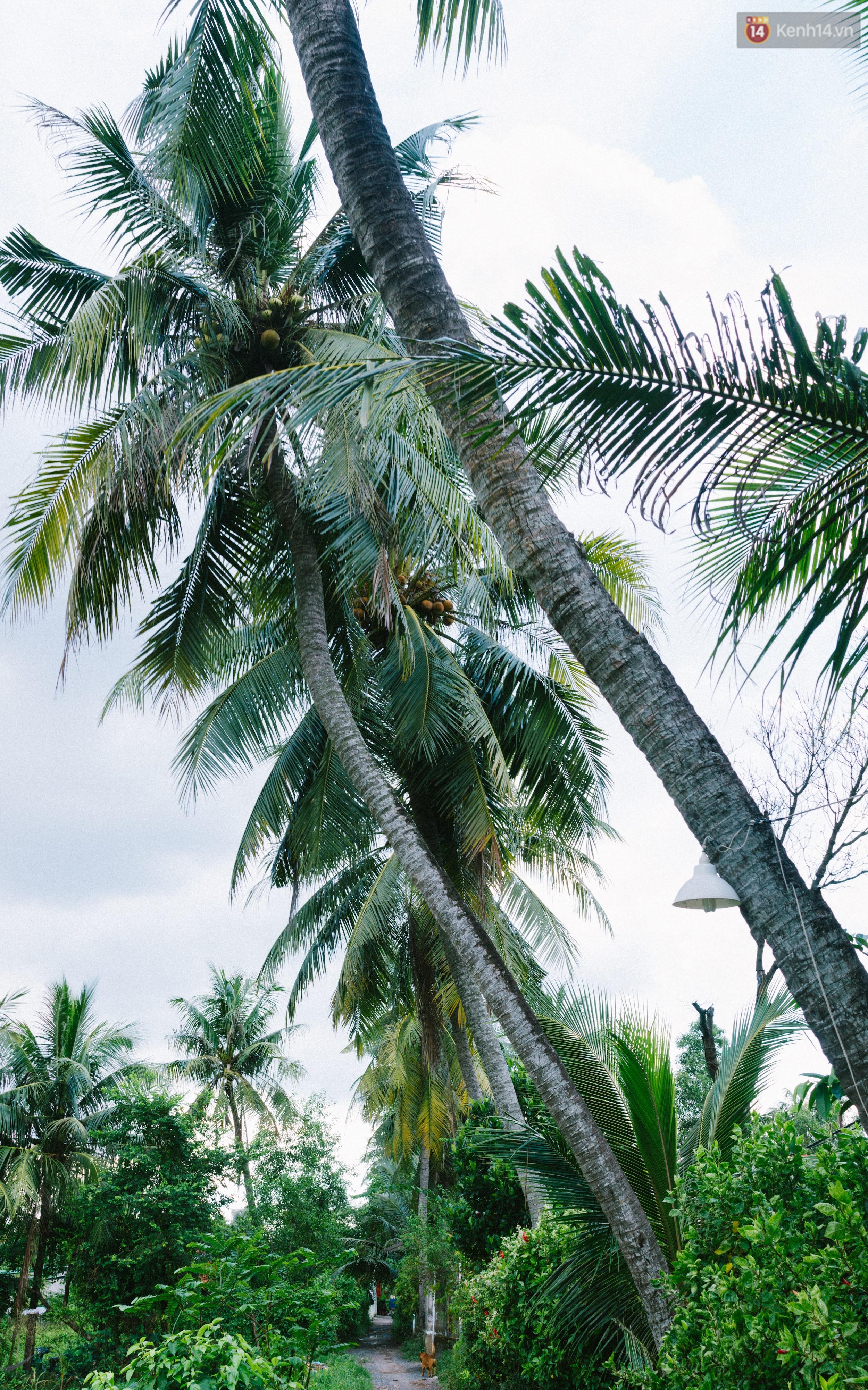 Chùm ảnh: Cuộc sống ở bán đảo Thanh Đa - Một miền nông thôn tách biệt dù chỉ cách trung tâm Sài Gòn vài km - Ảnh 14.