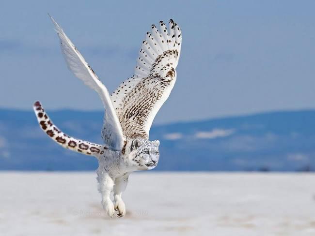 Những loài vật mới chỉ xuất hiện gần đây trong thời đại photoshop - Ảnh 31.
