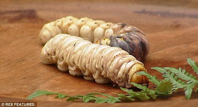 Món ăn độc nhất vô nhị của thổ dân Úc, nhìn đáng sợ hơn cả đuông dừa Việt Nam - Ảnh 1.