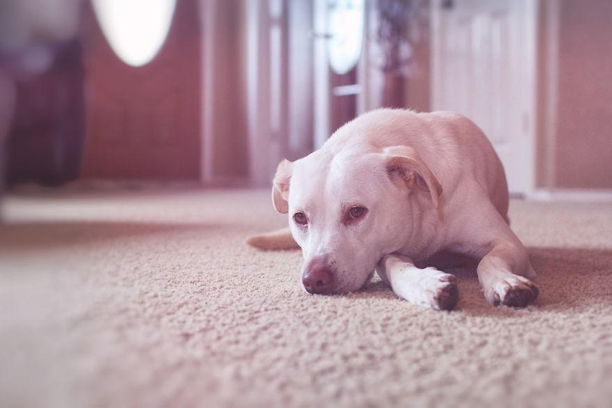Nhũn tim trước hình ảnh thắm thiết quấn quýt bên nhau của cô chủ nhỏ và chú chó - Ảnh 19.