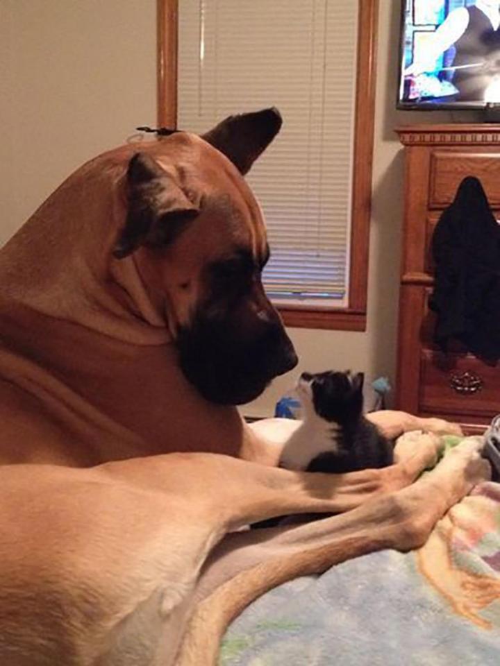 Khuôn mặt đáng thương của 14 chú chó bị những con mèo đanh đá bắt nạt - Ảnh 17.