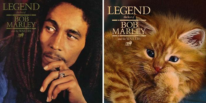 Thay đám mèo cute vào hình ca sĩ trên bìa album, cuối cùng hiệu ứng từ chúng còn hiệu quả hơn bản gốc - Ảnh 3.
