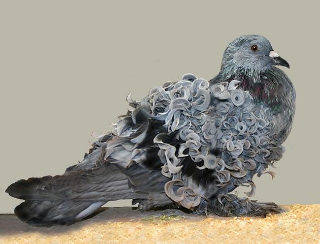 Chiêm ngưỡng 17 loài vật sở hữu bộ lông đặc biệt nhất trần đời - Ảnh 19.