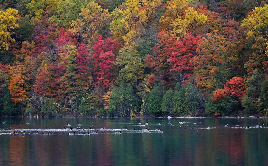 Ngắm phong cảnh đẹp đến ngoạn mục của những khu rừng vào mùa thu - Ảnh 24.