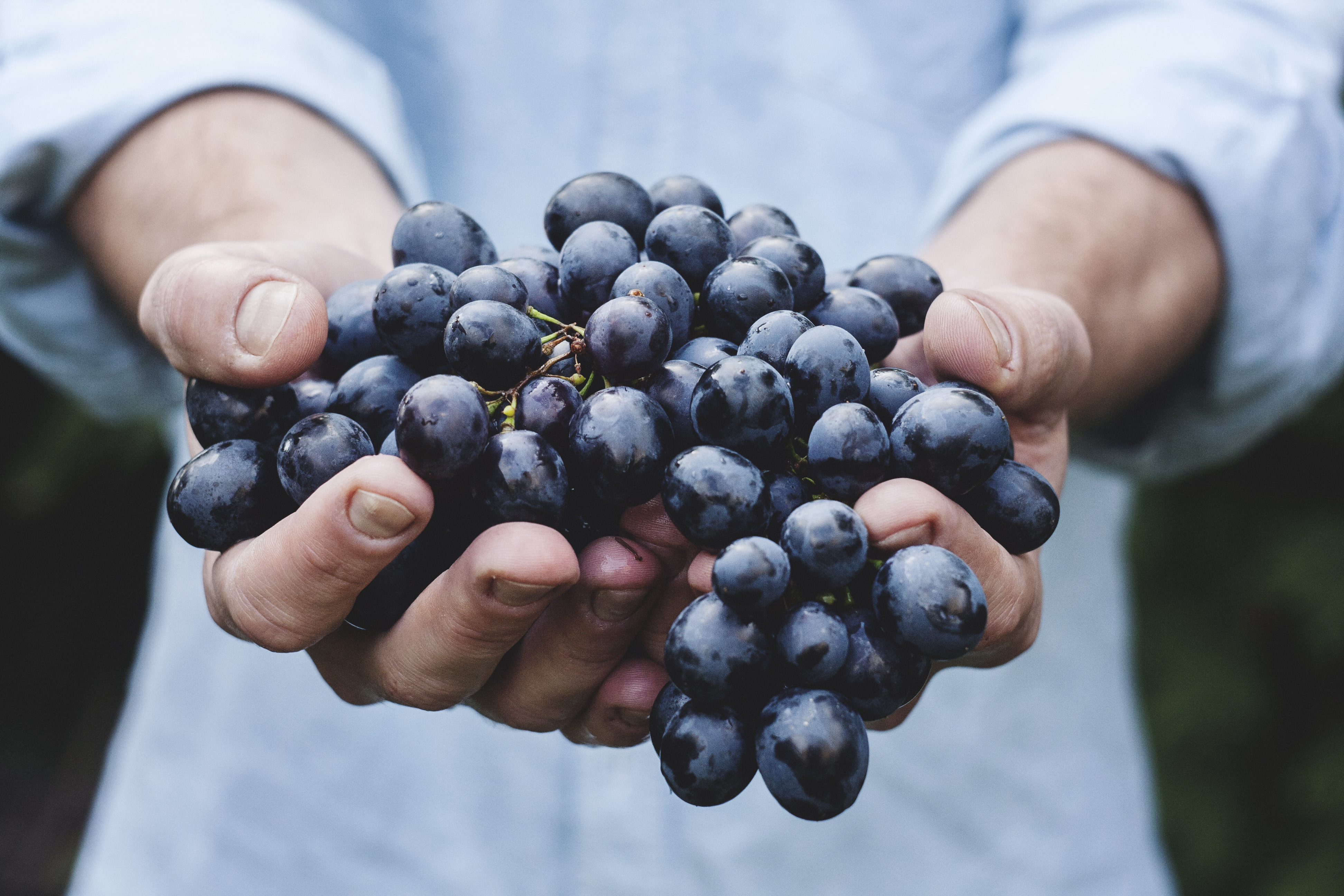 Con gái đừng bỏ qua những loại trái cây trị nếp nhăn cực hữu ích này nhé - Ảnh 10.