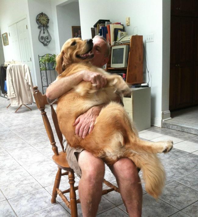 21 chú chó dù to xác nhưng lại có tâm hồn mong manh dễ vỡ - Ảnh 21.