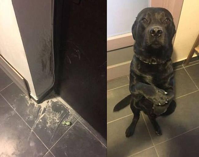 21 chú chó mèo nhân dịp chủ đi vắng là phá banh cả nhà - Ảnh 19.