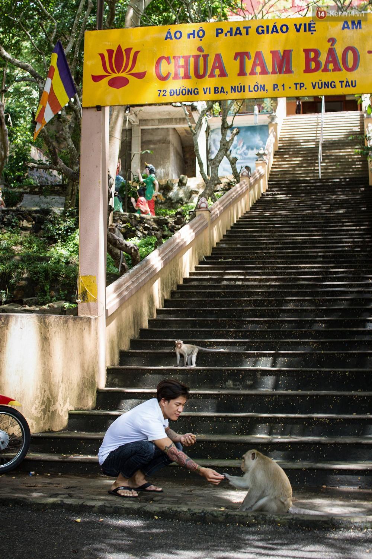 Chùm ảnh: Chuyện về đàn khỉ đuôi dài nương náu trong ngôi chùa ở Vũng Tàu, sống nhờ thức ăn của du khách - Ảnh 2.