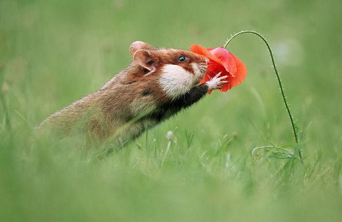 Cuộc sống hưởng thụ của 15 chú chuột hamster sống ở ngoài thế giới tự nhiên - Ảnh 5.