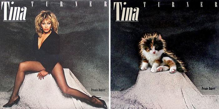 Thay đám mèo cute vào hình ca sĩ trên bìa album, cuối cùng hiệu ứng từ chúng còn hiệu quả hơn bản gốc - Ảnh 5.