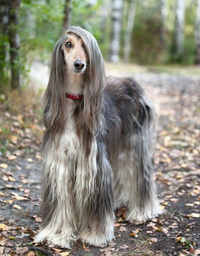 Chiêm ngưỡng 17 loài vật sở hữu bộ lông đặc biệt nhất trần đời - Ảnh 21.