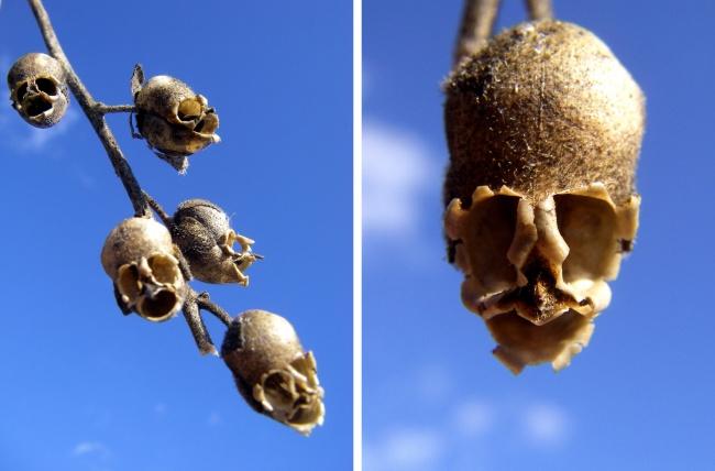 14 loài hoa có hình dạng kỳ lạ nhất thế giới - Ảnh 15.