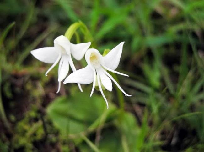 14 loài hoa có hình dạng kỳ lạ nhất thế giới - Ảnh 25.