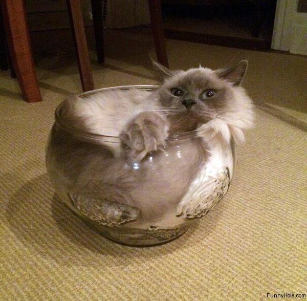 17 chú mèo vô duyên thích chỗ nào là tự tiện chui vào đấy - Ảnh 19.