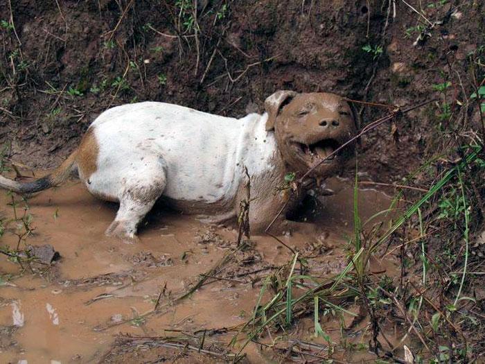 16 chú chó không dùng bột giặt nhưng cũng chẳng ngại gì vết bẩn - Ảnh 5.