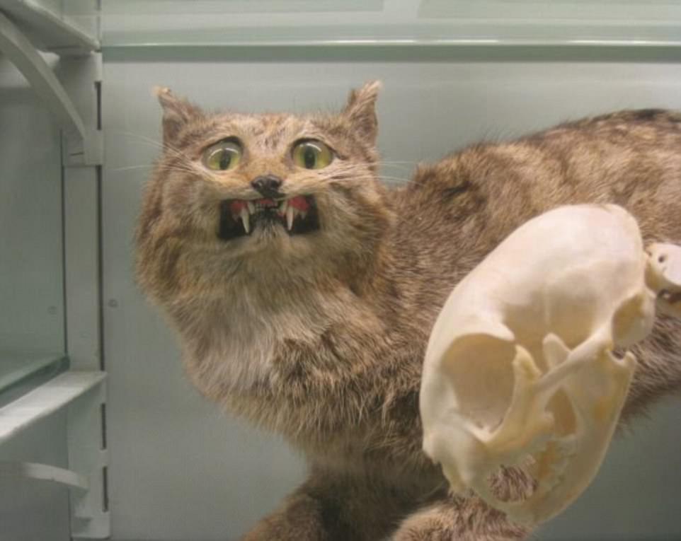Những xác thú nhồi bông mặt ngáo khiến bạn nhìn phát là cười như ma làm - Ảnh 5.