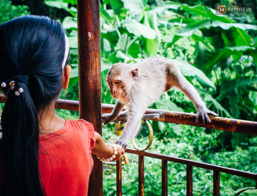 Chùm ảnh: Chuyện về đàn khỉ đuôi dài nương náu trong ngôi chùa ở Vũng Tàu, sống nhờ thức ăn của du khách - Ảnh 8.