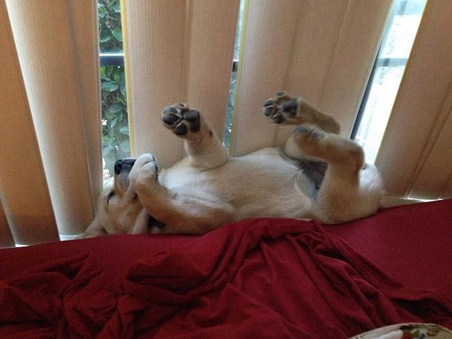 14 hành động kỳ quặc của các boss chó khiến con sen cười lăn cười bò - Ảnh 21.