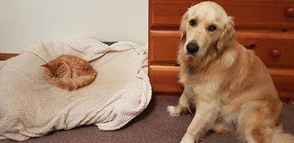 Khuôn mặt đáng thương của 14 chú chó bị những con mèo đanh đá bắt nạt - Ảnh 19.