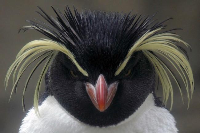 Chiêm ngưỡng 17 loài vật sở hữu bộ lông đặc biệt nhất trần đời - Ảnh 23.