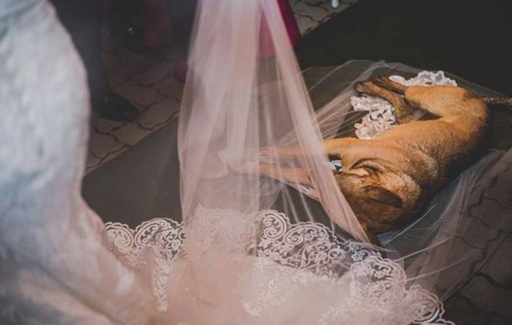 1001 khoảnh khắc mấy con boss bon chen phá ảnh cưới - Ảnh 9.