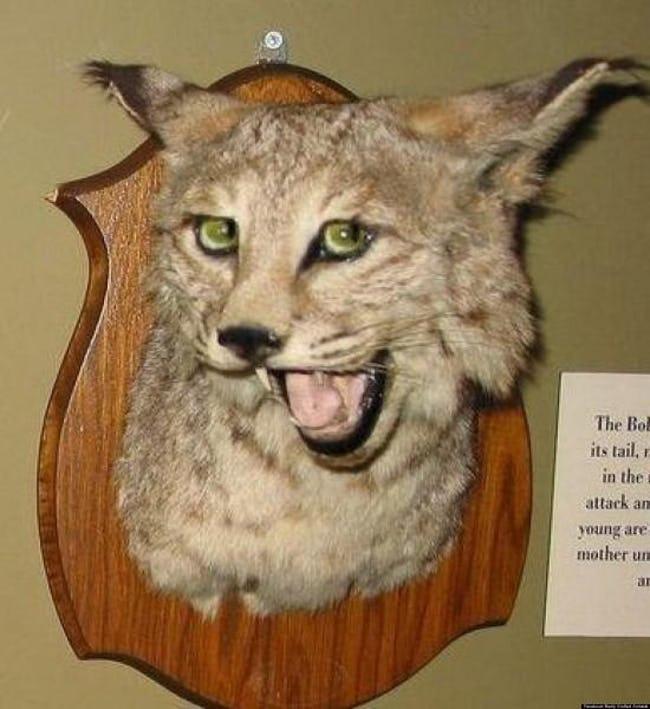 Những xác thú nhồi bông mặt ngáo khiến bạn nhìn phát là cười như ma làm - Ảnh 7.