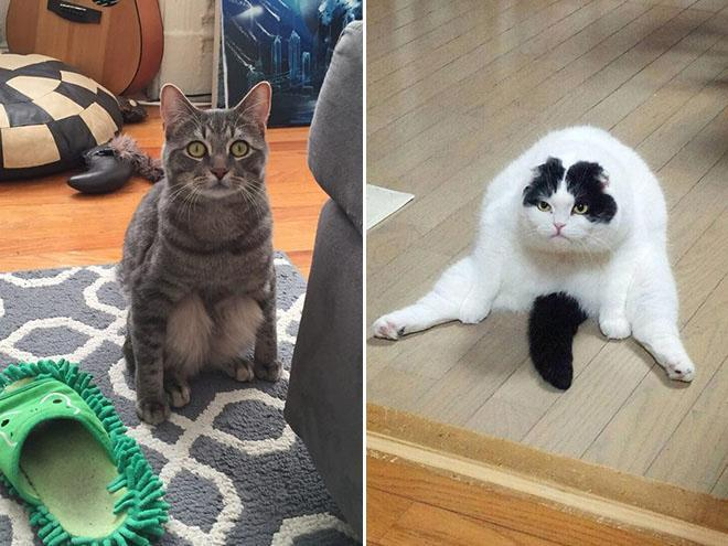 20 dáng ngồi phong thái hoàng thượng của các boss mèo - Ảnh 11.