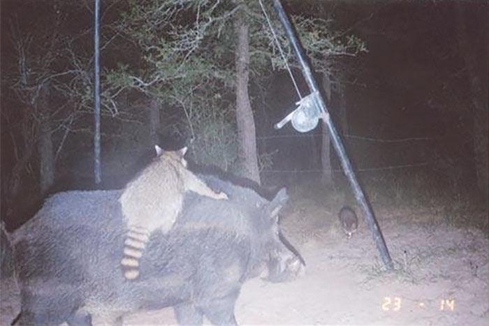 Đặt máy quay lén động vật, thợ săn bất ngờ khi thấy những hành vi kỳ lạ của chúng - Ảnh 13.