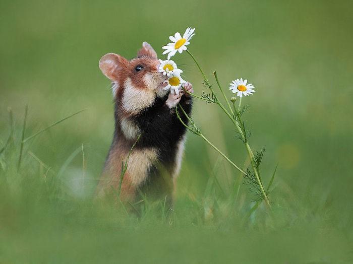 Cuộc sống hưởng thụ của 15 chú chuột hamster sống ở ngoài thế giới tự nhiên - Ảnh 9.
