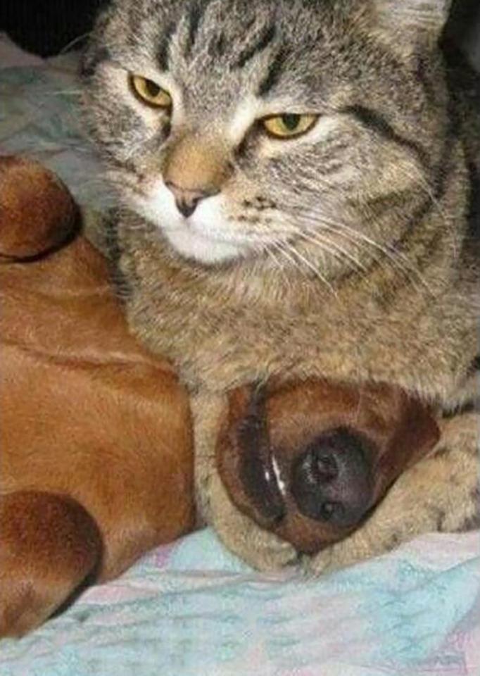 Khuôn mặt đáng thương của 14 chú chó bị những con mèo đanh đá bắt nạt - Ảnh 21.