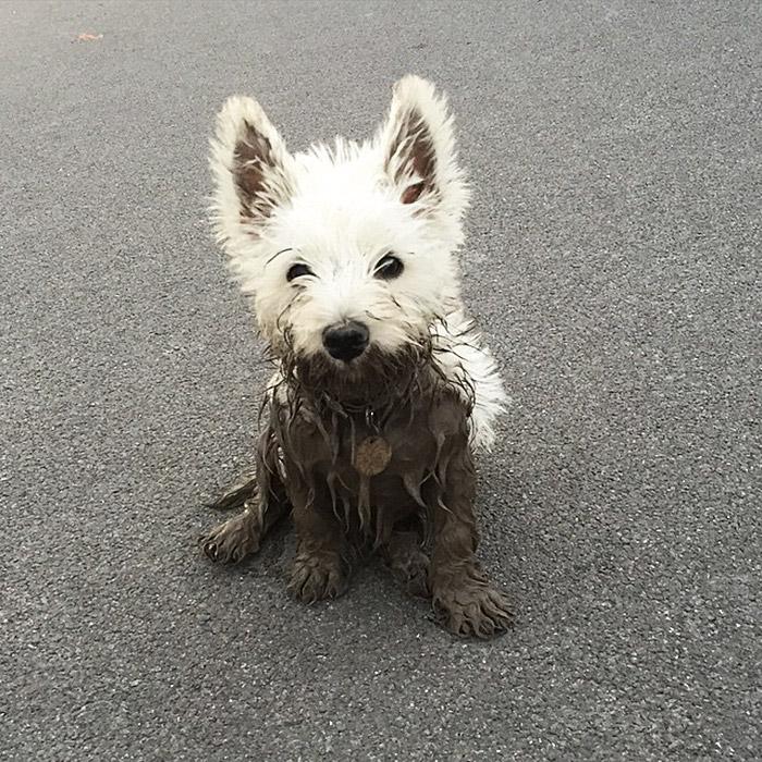 16 chú chó không dùng bột giặt nhưng cũng chẳng ngại gì vết bẩn - Ảnh 9.
