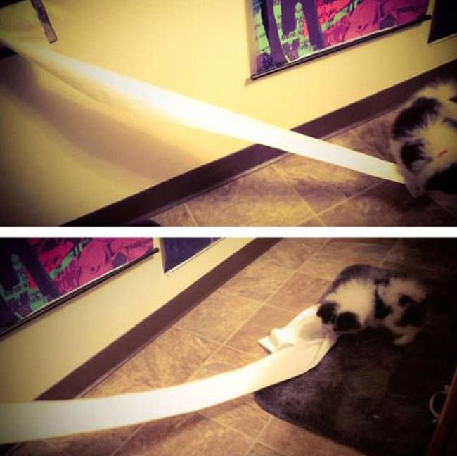 21 chú chó mèo nhân dịp chủ đi vắng là phá banh cả nhà - Ảnh 25.
