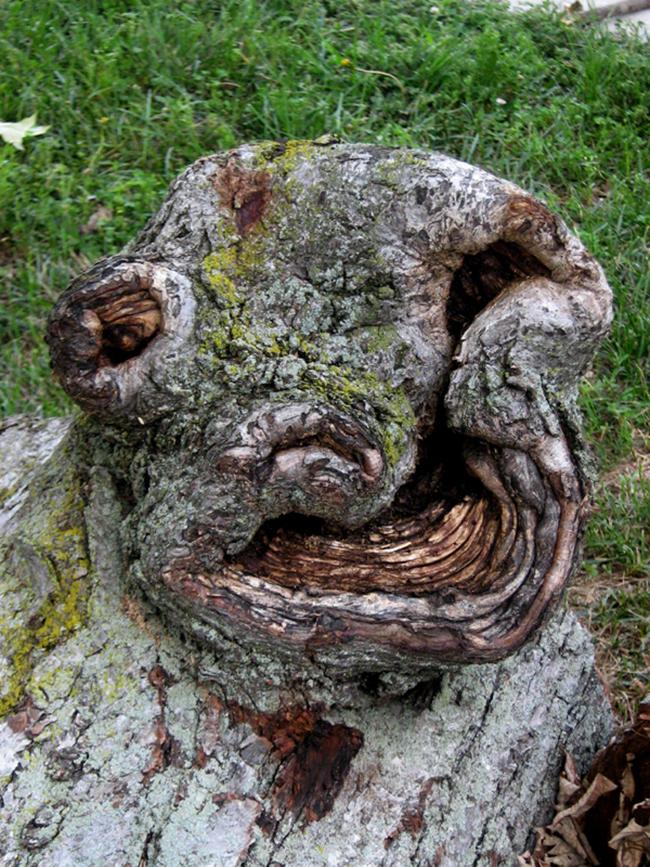 16 gương mặt ma quái tình cờ mọc trên những thân cây vô tri, vô giác - Ảnh 19.